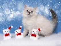Gatito y decoración de Navidad en nieve Imagen de archivo