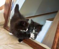 Gatito y espejo fotos de archivo libres de regalías