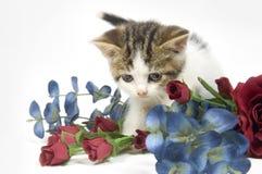 Gatito y flor Fotos de archivo