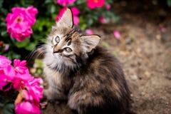 Gatito y flor Fotografía de archivo libre de regalías