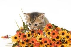 Gatito y flores Imagen de archivo libre de regalías