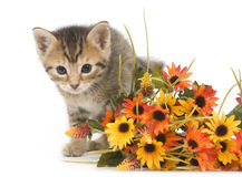 Gatito y flores Fotografía de archivo libre de regalías