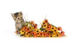 Gatito y flores Imágenes de archivo libres de regalías