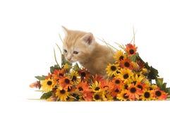 Gatito y flores Imagen de archivo