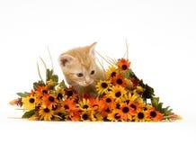Gatito y flores Fotografía de archivo