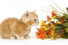 Gatito y flores Foto de archivo libre de regalías