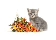 Gatito y flores grises Imagen de archivo