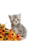 Gatito y flores grises Foto de archivo libre de regalías