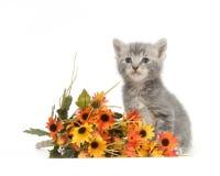 Gatito y flores grises imagen de archivo libre de regalías