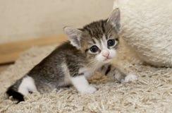 Gatito y gato foto de archivo libre de regalías