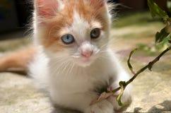Gatito y hojas Imagen de archivo libre de regalías