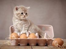 Gatito y huevos Foto de archivo libre de regalías