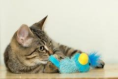 Gatito y juguete Imagen de archivo