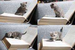Gatito y libros lindos, multicam, pantalla de la rejilla 2x2 Imagen de archivo libre de regalías