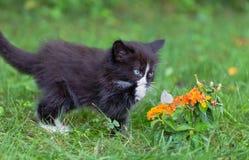 Gatito y mariposa fotografía de archivo libre de regalías