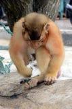 Gatito y mono del gato imagen de archivo libre de regalías
