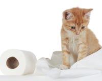 Gatito y papel higiénico Fotos de archivo libres de regalías