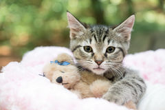 Gatito y peluche Imagen de archivo
