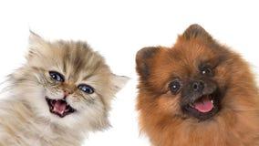 Gatito y perrito Foto de archivo libre de regalías