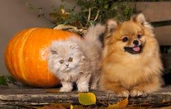 Gatito y perrito Fotos de archivo