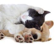 Gatito y perrito Imagen de archivo