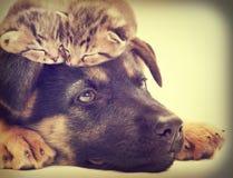 Gatito y perrito Foto de archivo