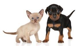 Gatito y perrito en un fondo blanco Imagen de archivo