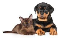 Gatito y perrito junto Foto de archivo libre de regalías