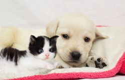 Gatito y perrito junto en una manta mullida Fotografía de archivo