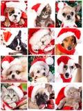 Gatito y perrito, sistema imagenes de archivo