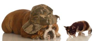 Gatito y perro deprimido Fotografía de archivo