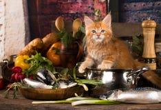 Gatito y pescados frescos en la cocina foto de archivo