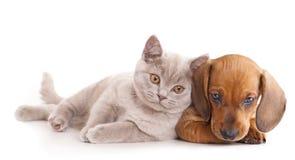 gatito y puppydachshund Imagen de archivo