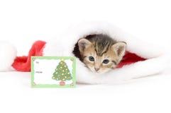 Gatito y sombrero de santa con la tarjeta Fotos de archivo