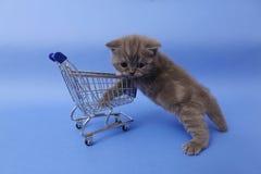 Gatito y un carro de la compra Fotos de archivo