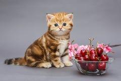 Gatito y un cuenco con la cereza Fotos de archivo libres de regalías
