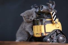 Gatito y un robot foto de archivo