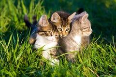 Gatitos. imagen de archivo