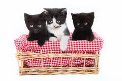 Gatitos Foto de archivo libre de regalías