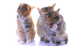Gatitos almacen de video