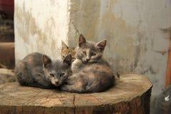 Gatitos Fotografía de archivo libre de regalías