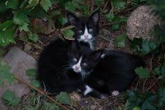 Gatitos Imagen de archivo libre de regalías