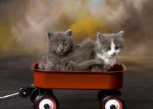 Gatitos borrosos en un carro Imagen de archivo libre de regalías