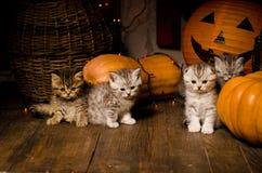 Gatitos con las calabazas para Halloween Foto de archivo libre de regalías