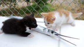 Gatitos con los pescados Foto de archivo