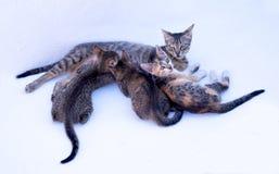 3 gatitos con su madre Imagen de archivo libre de regalías