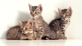 Gatitos contra una pantalla blanca almacen de video