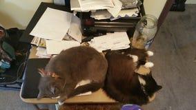 Gatitos de escritorio Foto de archivo libre de regalías