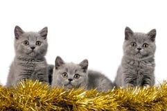Gatitos de la Navidad foto de archivo