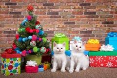 Gatitos de la Navidad Imágenes de archivo libres de regalías